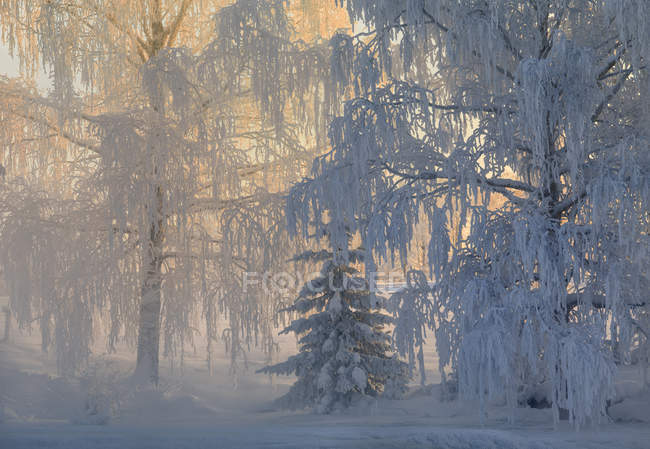Scenic view of forest at winter, selective focus - foto de stock