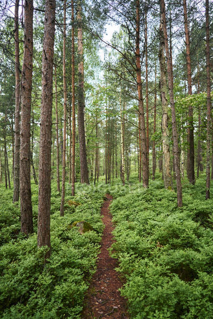 Scenic view of forest at summer, selective focus — Stock Photo