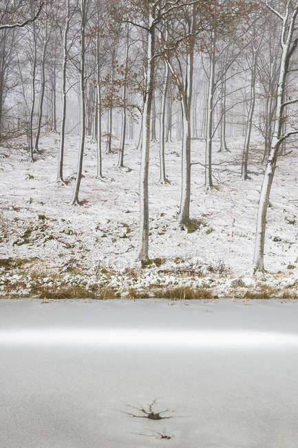 Scenic view of forest at winter, selective focus — Stock Photo