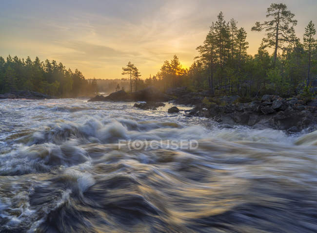Malerischer Blick auf den Fluss im Wald bei Sonnenuntergang — Stockfoto