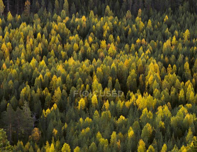 Vista de ángulo alto del bosque verde en verano — Stock Photo