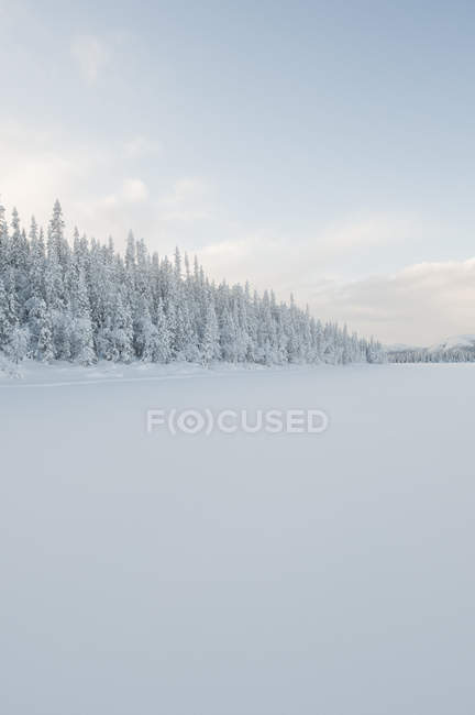 Scenic view of forest by frozen lake — Stock Photo