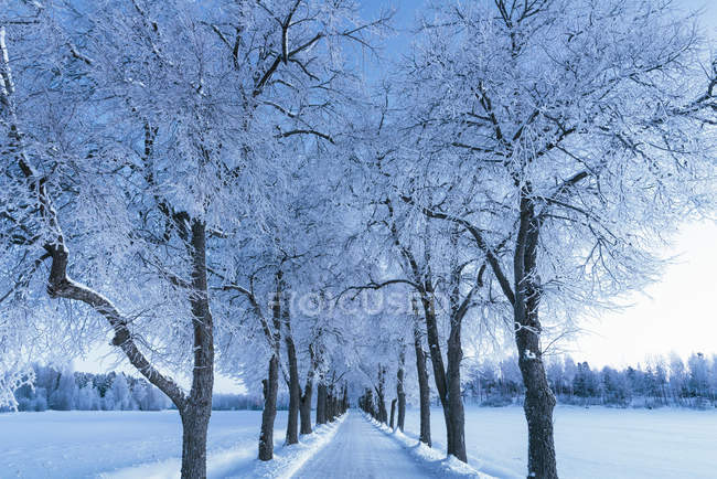Scenic view of winter landscape with road and trees — Stock Photo