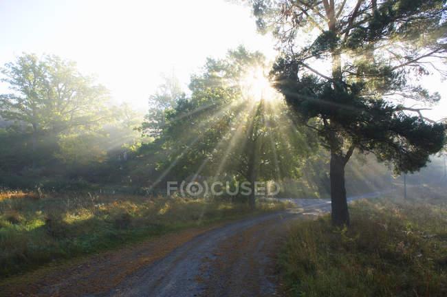 Vista panoramica di strada vuota nel bosco — Foto stock