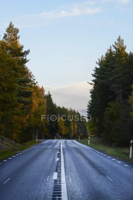Árvores ao longo da estrada, local tranquilo — Fotografia de Stock