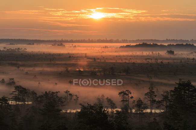 Scenic view of dawn over fields with trees — Stock Photo