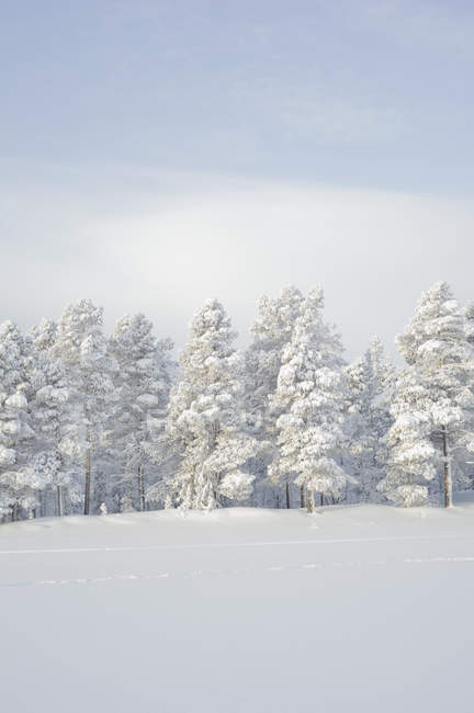 Scenic view of winter landscape, northern europe — Stock Photo