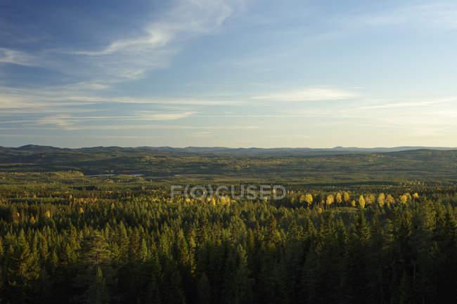 Vue panoramique sur la forêt, Sodra Garberg — Photo de stock