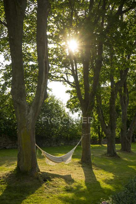 Порожній гамаку у дворі на заході сонця, Північна Європа — стокове фото