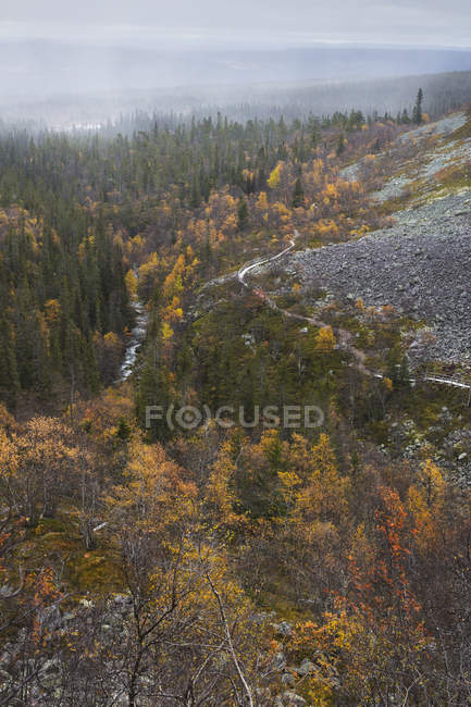 Scenic view of autumn forest at Fulufjallets National Park — Stock Photo