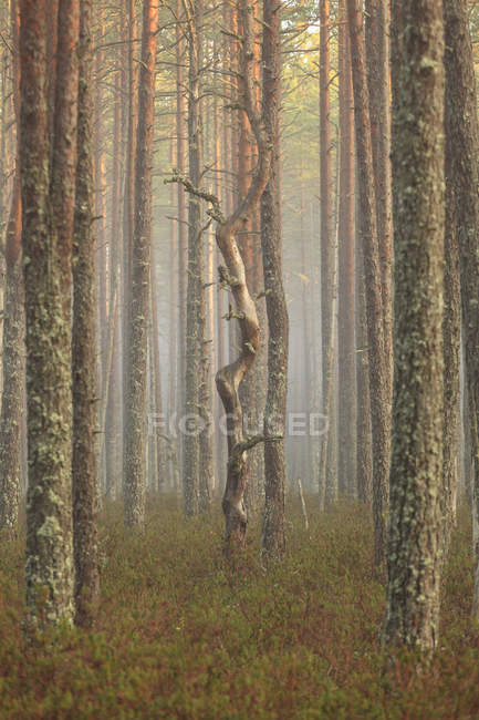 Tree trunks at forest, selective focus — Stock Photo
