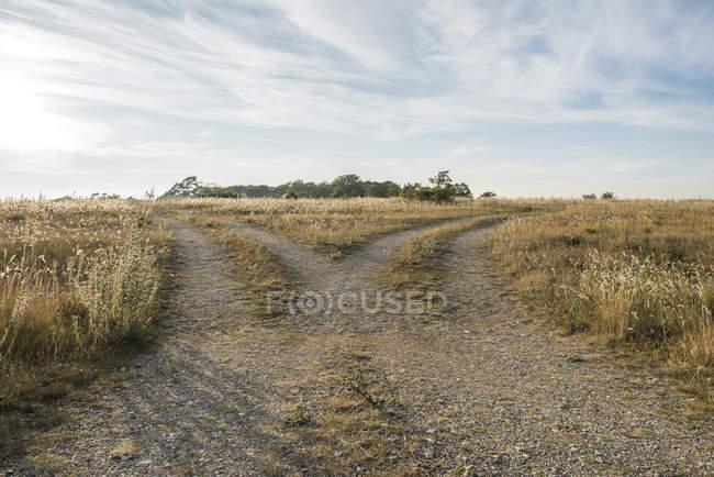 Мальовничим видом роздвоєним грунтової дороги в поле — стокове фото