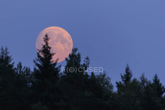 Scenic view of moon behind trees — Stock Photo