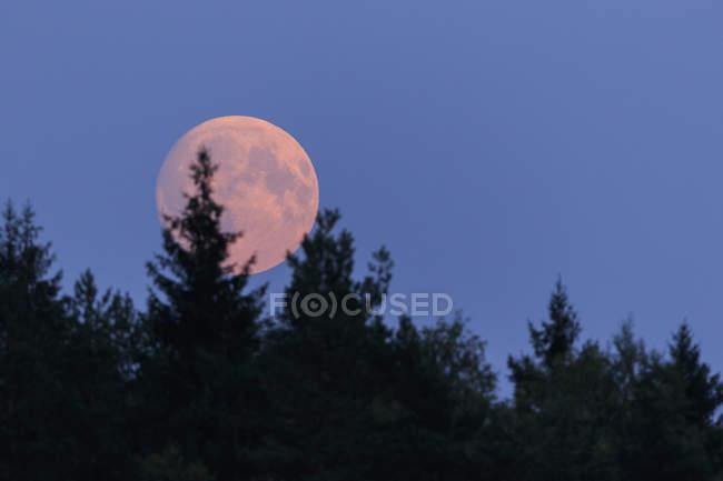 Vista panorámica de la luna detrás de los árboles - foto de stock