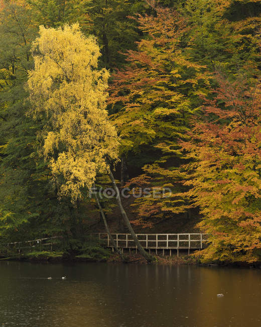 Autumn trees at Soderasens National Park — Stock Photo