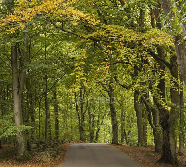Мальовничим видом порожній дороги в лісі — стокове фото