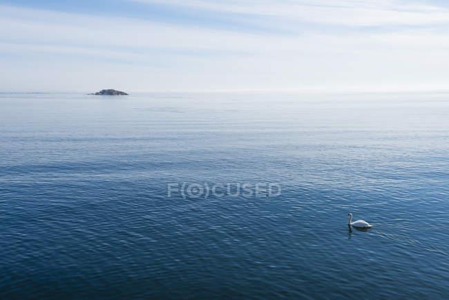 Повышенные вид морской пейзаж с немой лебедь — стоковое фото