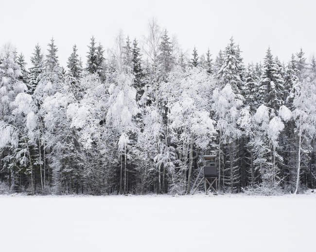 Scenic view of snow covered forest — Stock Photo