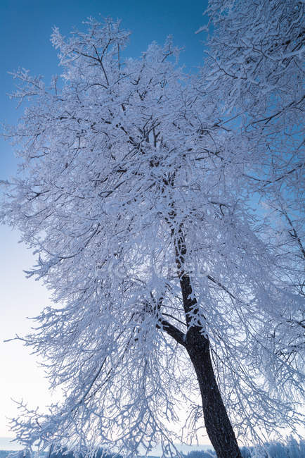 Низким углом зрения зимний пейзаж с деревьями — стоковое фото