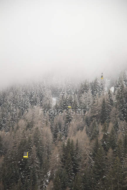 Fog above trees in La Thulie, Italy — Stock Photo