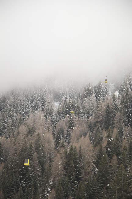 Туман над дерев в Ла Thulie (Італія) — стокове фото