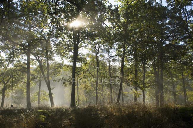 Мальовничий вид на ліс, в туман, Північна Європа — стокове фото
