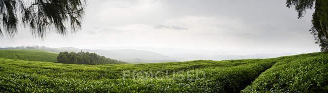 Panoramique de la forêt de Nyungwe, sous un ciel couvert au Rwanda — Photo de stock