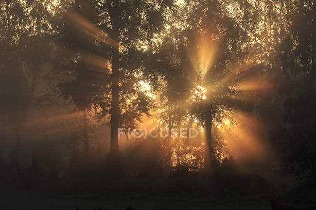 Sunbeam through trees at dawn, selective focus — Stock Photo