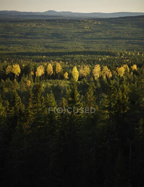 Vue panoramique de la forêt à été, Sodra Garberg — Photo de stock