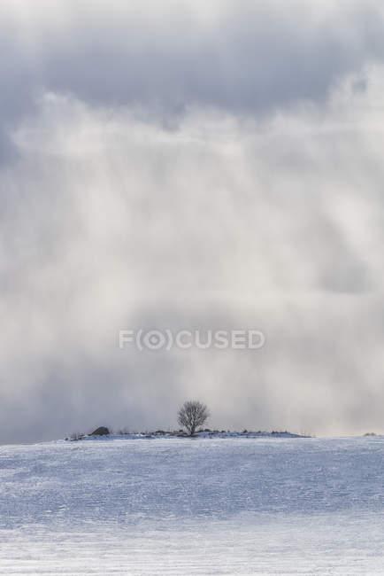 Живописный вид на пейзаж зимой, Швеция — стоковое фото