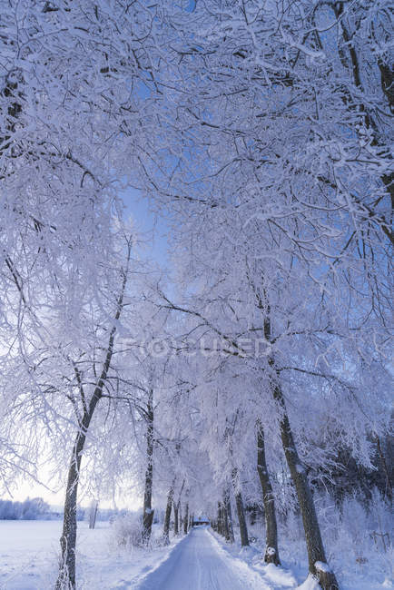Winter landscape with road and trees, diminishing perspective — Stock Photo