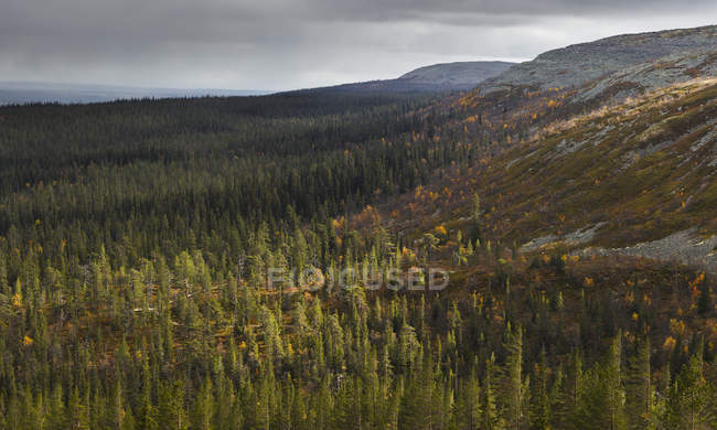Scenic view of green forest, Fulufjallets National Park — Stock Photo