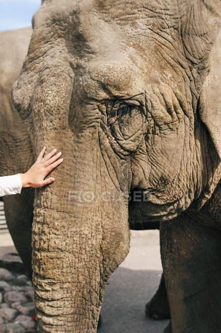 Vista ritagliata di uomo accarezzando elefante, messa a fuoco selettiva — Foto stock