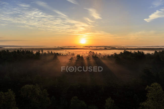 Scenic view of forest at sunrise with sunbeams — Stock Photo