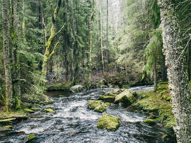 Scenic view of stream in forest at spring — Photo de stock