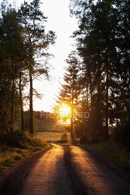 Пейзаж с пустой дорогой и заходящим солнцем — стоковое фото
