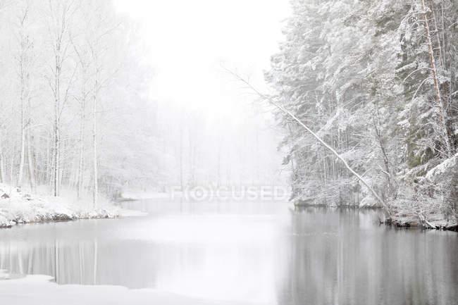 Vista panorâmica da floresta coberta de rio e neve — Fotografia de Stock