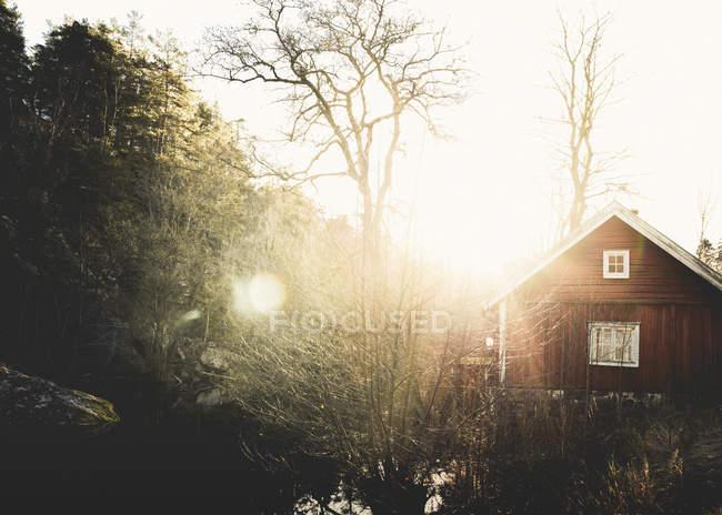 Splende il sole attraverso gli alberi, riflesso lente — Foto stock