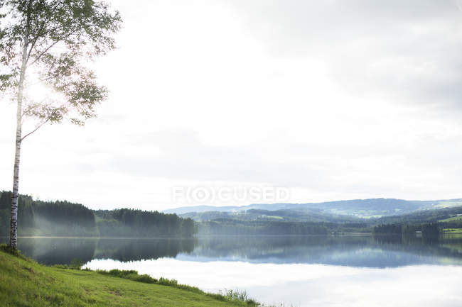 Scenic view of landscape with birch tree and lake — Stock Photo