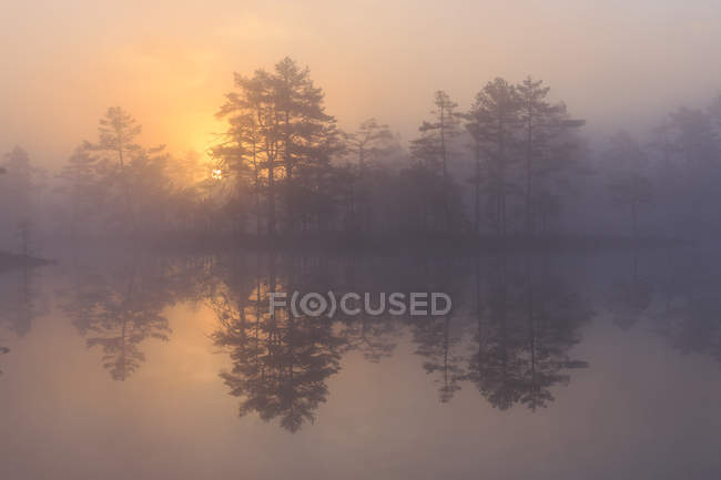 Trees at sunrise, sweden, selective focus — Stock Photo