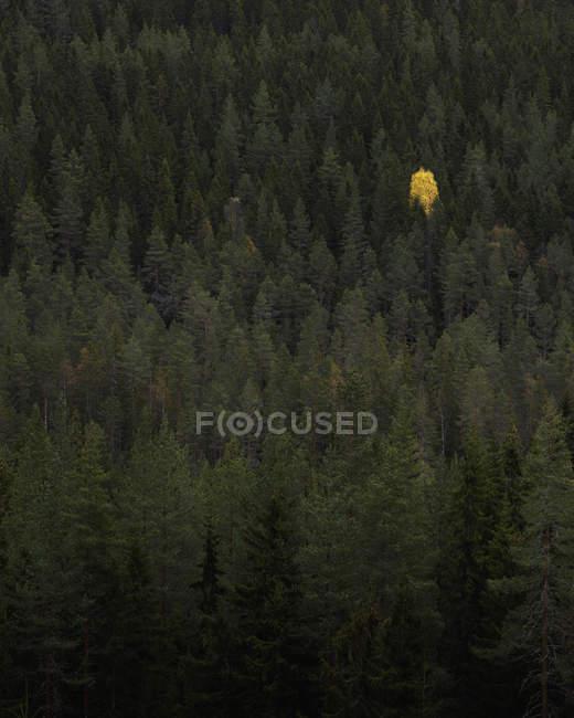 Vista de ángulo alto del bosque verde, Sodra Garberg — Stock Photo