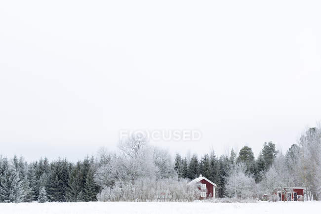 Forest behind houses at winter, tranquil scene — Stock Photo