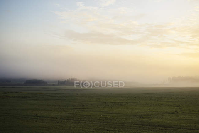 Fog above green field, dramatic lights — Stock Photo