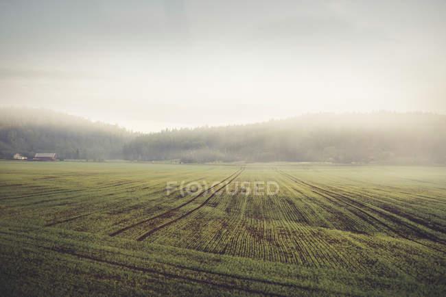 Туман над зеленому полі, Північна Європа — стокове фото