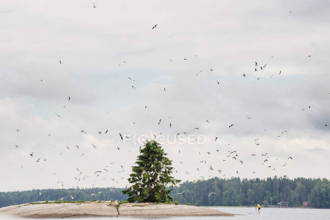 Birds flying above island — Stock Photo