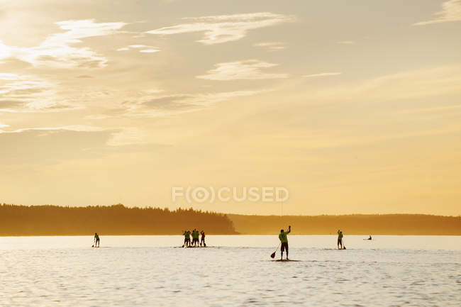 Men competing on paddleboards at sunset — стокове фото