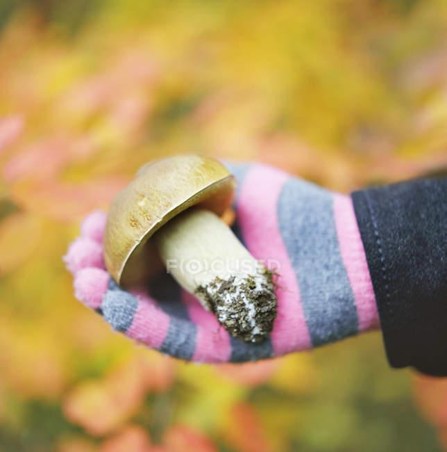 Hand in glove holding fresh picked mushroom — Stock Photo