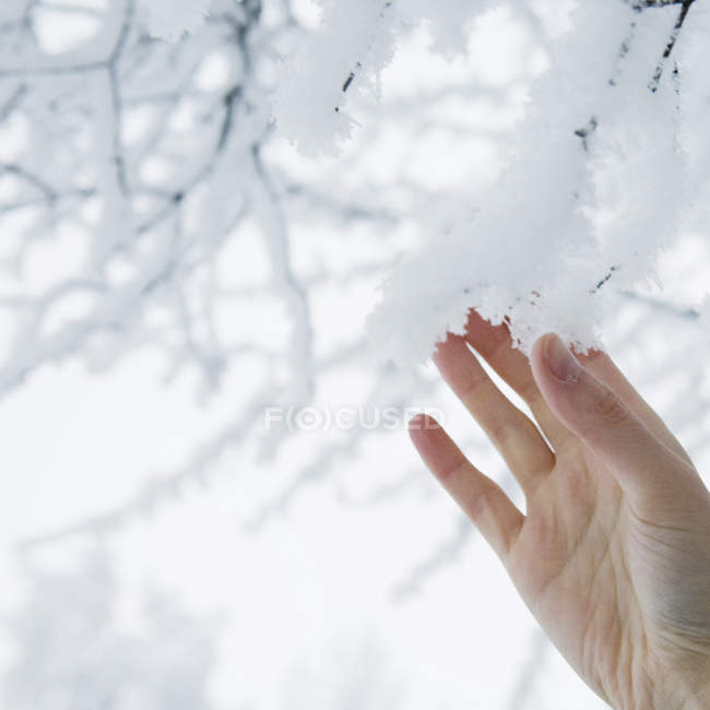 Woman touching snowy twigs, selective focus — Stock Photo