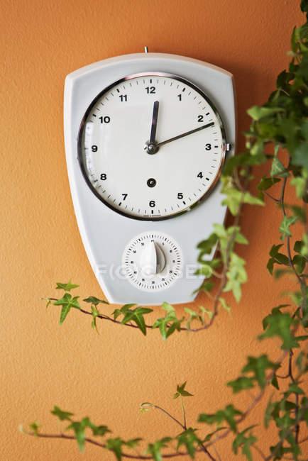 Vista frontal del reloj de pared y la hiedra - foto de stock