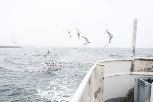 Seagulls flying over sea, view from boat — Stock Photo